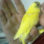 Дама с попугаем