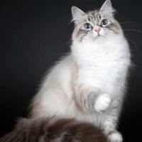 Cat_onamat