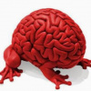 Мозгожуйка Мозгоедова