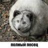 ewgenn Grigoryev