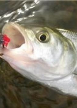 Рыбачьи рассказы