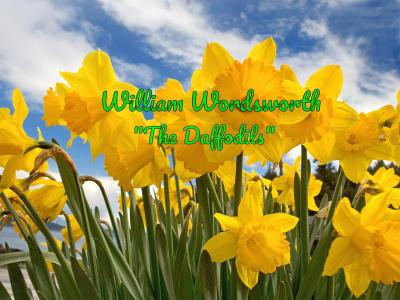 The Daffodils (Жёлтые нарциссы)