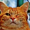 Кот волонтёр